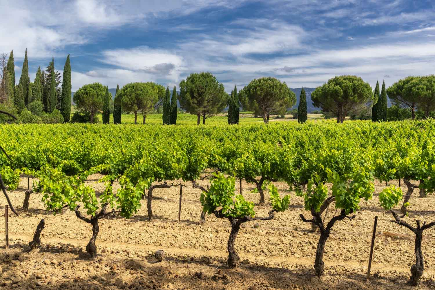 Provence history and vineyards